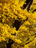 Autumn in Derbyshire. Autumn colour near Calke Park in Derbyshire, England Stock Photos