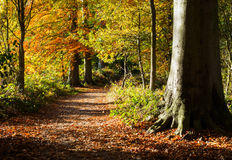Autumn in Derbyshire. Colourful autumn walk near Calke Park in Derbyshire, England, captured in early November Royalty Free Stock Photography