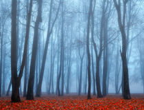 Autumn deserted park in the fog -autumn landscape view of autumn foggy park. Royalty Free Stock Images