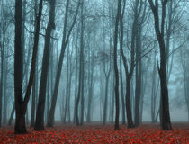 Autumn deserted park in foggy weather -autumn landscape view of autumn foggy park. Stock Image