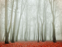 Autumn deserted park in foggy weather -autumn landscape view of autumn foggy park. Stock Photography