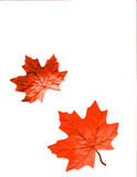 Autumn Design. An autumn design background with leaves of fall colors vector illustration