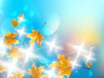 Autumn design background. Stock Photos