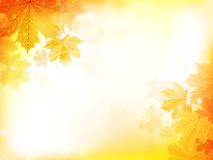 Autumn design background with leaves Stock Photos