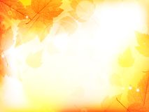 Autumn design background with leaves Stock Photography