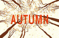 Autumn Design Illustrations Fotografía de archivo