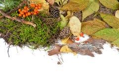 Autumn design Stock Images