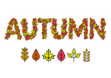 Autumn Design Leaves of trees. Vector illustration.  Royalty Free Stock Photos