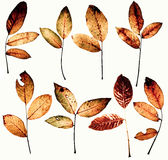 Autumn design pack. Collection of grunge isolated on white beautiful colored leaves. Each leaf isolated with clipping paths. Use in your design Royalty Free Stock Photos