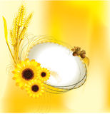 Autumn design with sunflower and wheat. Illustration background Royalty Free Stock Photography