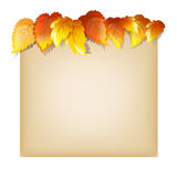 Autumn Design Template Stock Image
