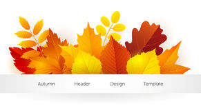 Autumn design template Royalty Free Stock Images
