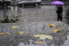 autumn deszcz Zdjęcia Royalty Free