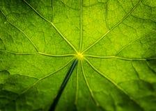 Autumn Stock Image