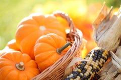 Autumn detail Royalty Free Stock Image