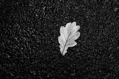 Black and white leaf texture on rainy ground background Stock Image