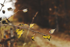 Autumn detail. Yellow and black leaves marking the pathway Royalty Free Stock Photo