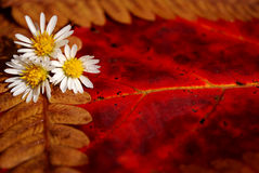 Autumn Details Stock Image
