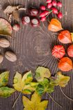 Autumn details and colors. On leaves, nuts, chestnuts and texture Stock Image