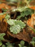 Autumn dew Stock Images