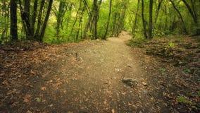 Autumn Into die Waldbahn im Wald Stockfotos