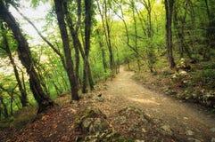 Autumn Into die Waldbahn im Wald Stockfoto