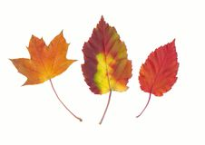 Autumn different leaves Stock Images