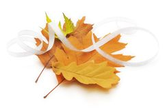 Autumn different leaves Royalty Free Stock Photos