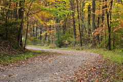 Autumn dirt road Royalty Free Stock Photo