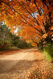 Autumn Dirt Road Royalty Free Stock Images