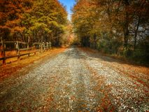 Autumn Dirtroad Stock Images