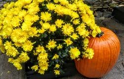 Autumn Display fotos de stock