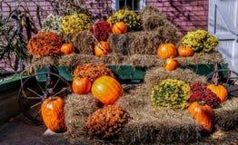 Autumn Display foto de stock royalty free