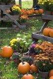 Autumn Display. Of Pumpkins and Mums stock photos