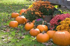 Autumn Display. Of Pumpkins and Mums Royalty Free Stock Image