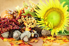 Autumn Display Royalty Free Stock Image