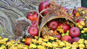 Autumn Display Stock Images