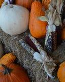 Autumn Display Royaltyfria Foton