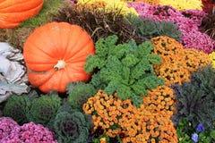 Autumn Display variopinto delle piante e delle zucche Fotografia Stock
