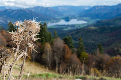 Autumn Distel Austria Royalty Free Stock Photography