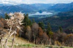 Autumn Distel Austria Royalty Free Stock Photography