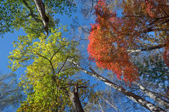 Autumn dizziness. Stock Photos