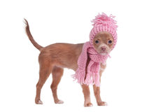 Autumn dog clothes Royalty Free Stock Photos