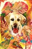 Autumn dog. Hand drawn illustration stock illustration