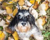 Autumn dog Stock Image