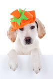 Autumn Dog Sign Royalty-vrije Stock Foto