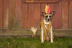 Autumn Dog Sign immagine stock libera da diritti