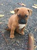 Autumn dog. Thinking about life Royalty Free Stock Image