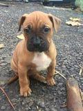 Autumn dog. Thinking about life Stock Photos