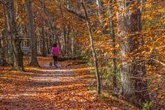 Autumn Dog Walk photographie stock libre de droits